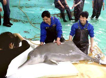 Varios especialistas examinan un delfín blanco del río Yangtze, en un acuario en la ciudad china de Wuhan, en junio de 2002.