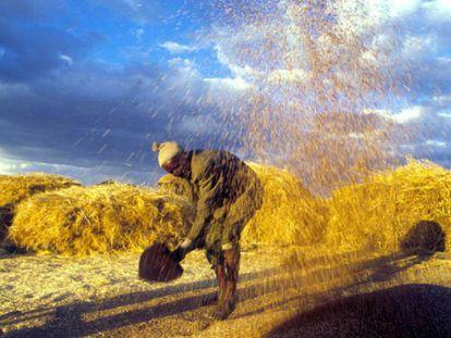 Un agricultor aventando cereales con su pala en un campo de Etiopía.