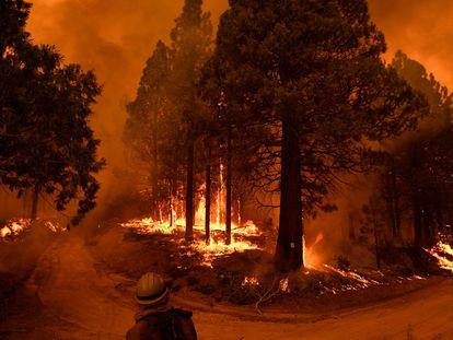 Incendio en un parque nacional, en California (EE UU) en septiembre.