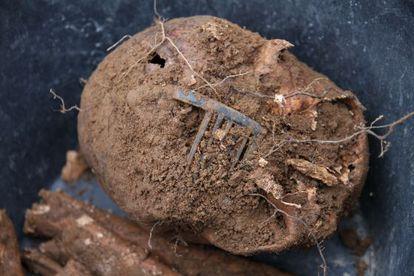 Detalle del cráneo con la peineta.