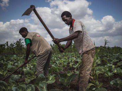Agricultores en Mozambique, este pasado mes de agosto.