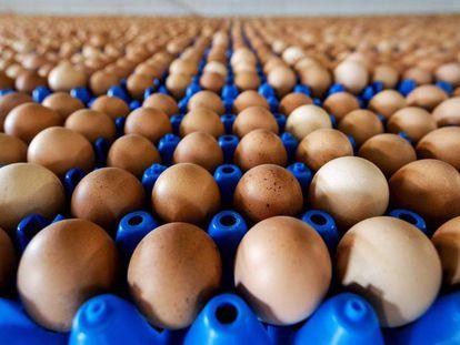 Producción de huevos de una granja en Putten, en Holanda.