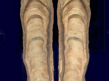 Corte de la estalagmita ESP06 de Cova Arcoia (Folgoso do Courel, Lugo), con los diferentes acontecimientos del clima grabados desde hace 550.000 años hasta el presente.