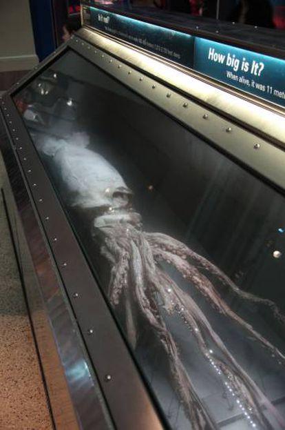 El calamar del Smithsonian.