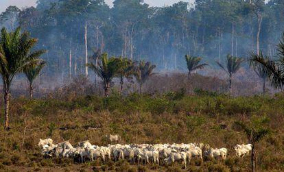 Una zona afectada por los incendios de agosto en la Amazonía, cerca de Novo Progresso (Brasil).