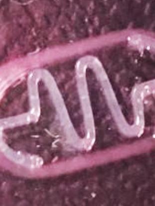 Foto de un biobot desarrollado por el IBEC catalán, en la que se aprecia la estructura plástica.