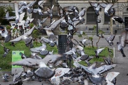 Dispensadores de pienso anticonceptivo para palomas en la plaza Catalunya.