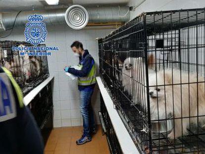 La red cortaba las cuerdas vocales a los animales para que los vecinos no se percataran de la existencia de los criaderos clandestinos
