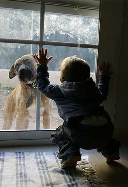 Un niño contempla a un perro a través de un cristal.