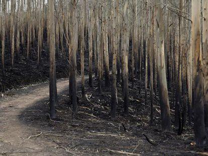 Monte quemado tras un incendio en diciembre en Vieénoles  (Cantabria).