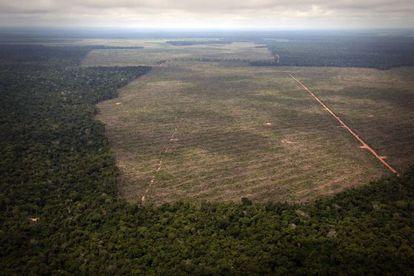 El ritmo de deforestación de la Amazonia brasileña volvió a incrementarse en 2013.