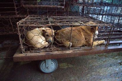 Una jaula de perros en el mercado Los Tres Pájaros de Dalí.