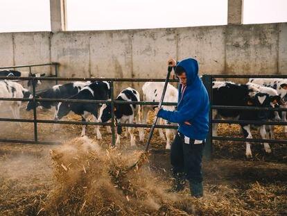 Los ganaderos pretenden transformar los residuos que generan sus animales.