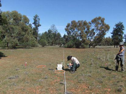 Toma de muestras en una parcela de Nueva Gales del sur en Australia.