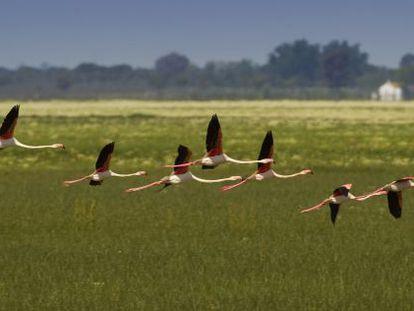 Flamencos en el parque de Doñana.