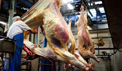 Un carnicero desuella una vaca en un matadero danés.