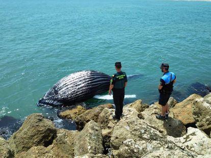 La cría de ballena sin vida en el puerto de Gandia, con agentes de la Guardia Civil y la Policía Local. Imagen: Policía Local de Gandia
