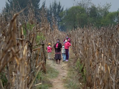 La familia Mejía, que lleva meses alimentándose gracias a la agricultura de autoabastecimiento, en Quiché, Guatemala.