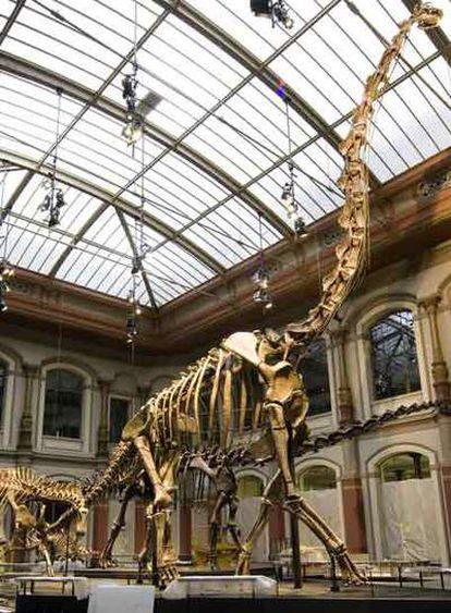 Tras dos años de ausencia, el <i>Brachiosaurus brancai</i> y las cuatro salas renovadas del museo recibieron 40.000 visitantes en tres días.