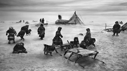 Los nenets montan su tienda o tchoum al norte del río Obi, en la península de Yamal, en Siberia (Rusia).