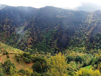 Paisaje arrasado por el fuego en la zona de los Ancares, Reserva Natural y pulmón de Galicia.