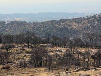 El monte de Cadalso de los Vidrios dos años después del incendio que comenzó en Almorox (Toledo).