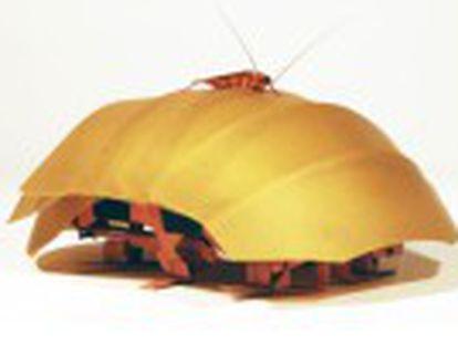 Este insecto inspira el diseño de una estructura capaz de aplastarse y entrar dentro de grietas, útil para rescate en terremotos