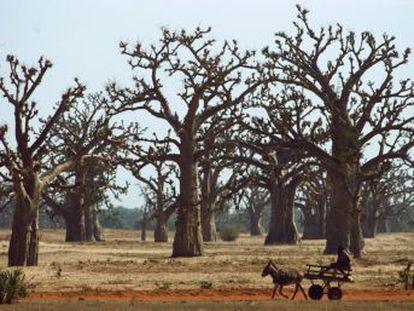 Imágenes de Google y Bing desvelan 467 millones de hectáreas nuevas de árboles en las regiones áridas