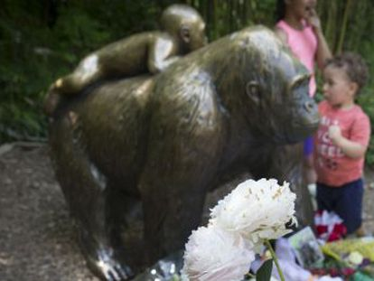 La polémica en torno a la muerte de Harambe en Cincinnati refleja la fascinación por los animales más cercanos a nosotros