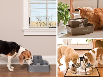 Mantén a tu mascota hidratada con estos bebederos para perros y gatos superventas en Amazon México.