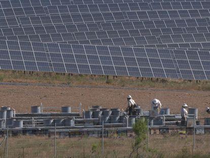 Recolección de miel en la planta fotovoltaica de Iberdrola en Andévalo, en Huelva.
