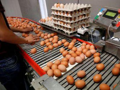 España asegura que no se han distribuido estos productos contaminados con fipronil que ya se ha detectado en 13 países europeos