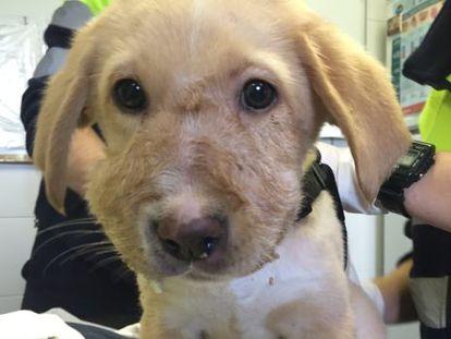 El cachorro rescatado en un contenedor por el Sevemur.