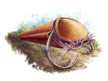 Reconstrucción del hiolito 'Haplophrentis' con sus tentáculos del lofóforo y su par de helenos (apéndices) que le impulsan desde el fondo oceánico.