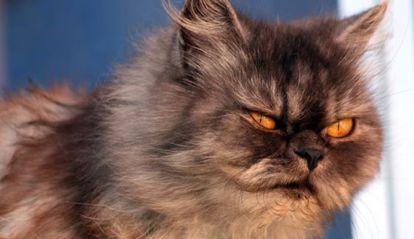 Los gatos han sido partícipes en la extinción de varias especies