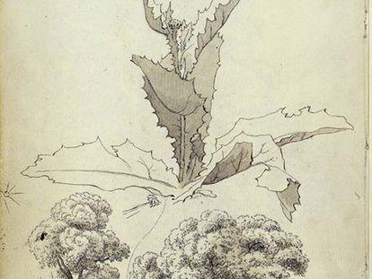 Estudio de un cardo y estudios de árbol