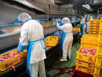 Empleados trabajan en un matadero en Baja Sajonia, al norte de Alemania.
