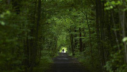 Vegetación de un bosque europeo.