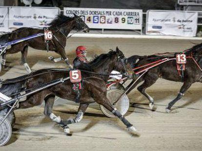 Una de las tradicionales carreras de caballos trotones que se celebran en el hipódromo de Son Pardo, en Palma de Mallorca.