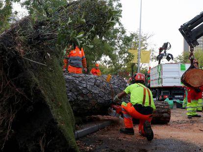 El árbol caído en el Paseo de la Castellana de Madrid.