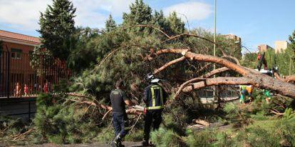 Los dos árboles caídos frente al colegio Montserrat en Madrid.