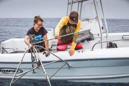 Fotografía de 2019 cedida por Vulcan Inc donde aparecen dos personas soltando una estación submarina de vídeo a control remoto (BRUVS) en el mar de Hawái, (EE UU).