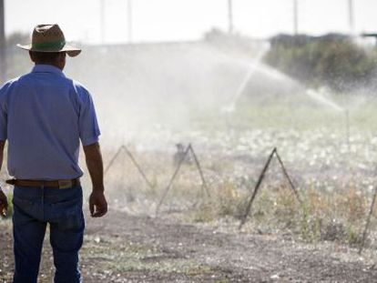 Un agricultor en uno de los regadíos de la zona de Nueva Jarilla, en Jerez.