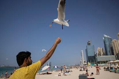 Un hombre da de comer a las gaviotas en Marina Beach, la zona playera de Dubái, el pasado febrero.
