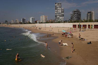 Dueños de perros se bañan este miércoles en la playa de Llevant de Barcelona, habilitada especialmente para esta finalidad con aforo limitado.