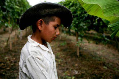 Agricultor que cultiva fruta de la pasión en Buga, Colombia.