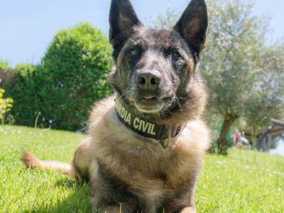 Elton, el perro que busca a Gabriel.