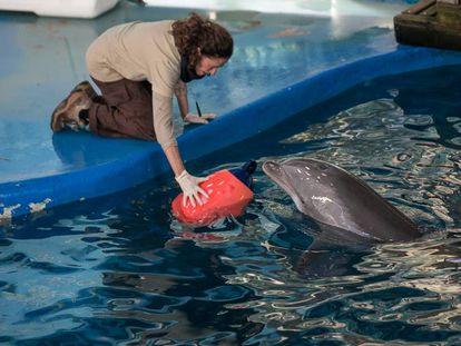 Una cuidadora junto a uno de los delfines del Zoo