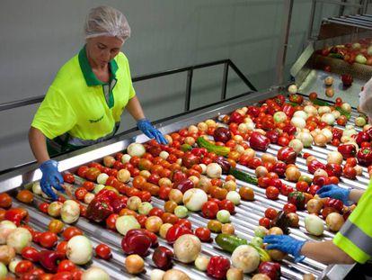 Dos trabajadoras seleccionan hortalizas en la planta actual de Alvalle en Murcia
