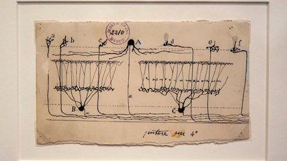 Dibujo procedente de una exposición sobre le cerebro en el MIT.